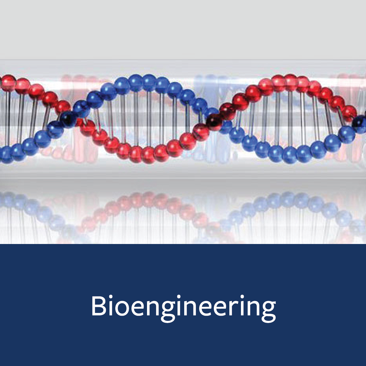 Bioengineering Major Map