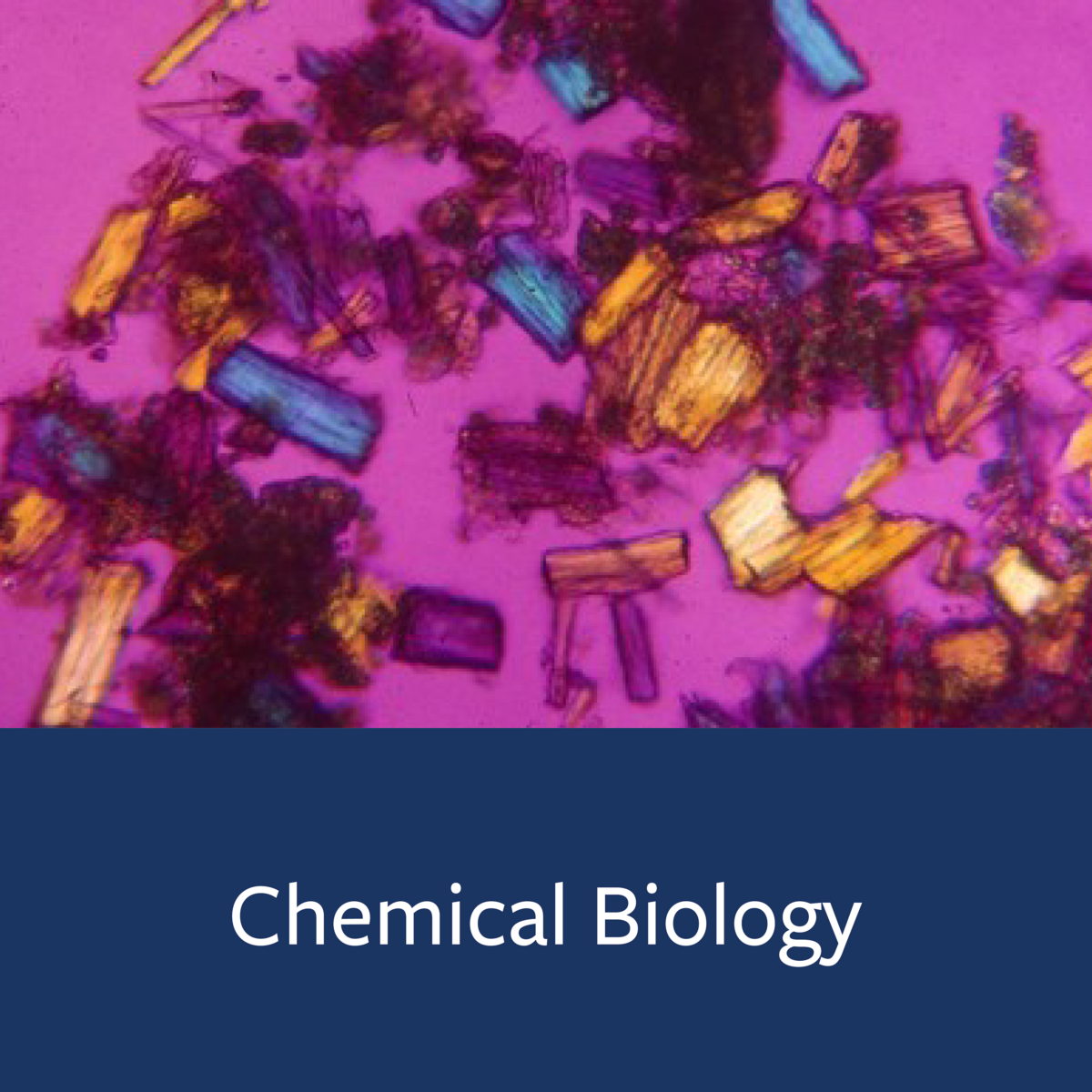 Chemical Biology Major Map