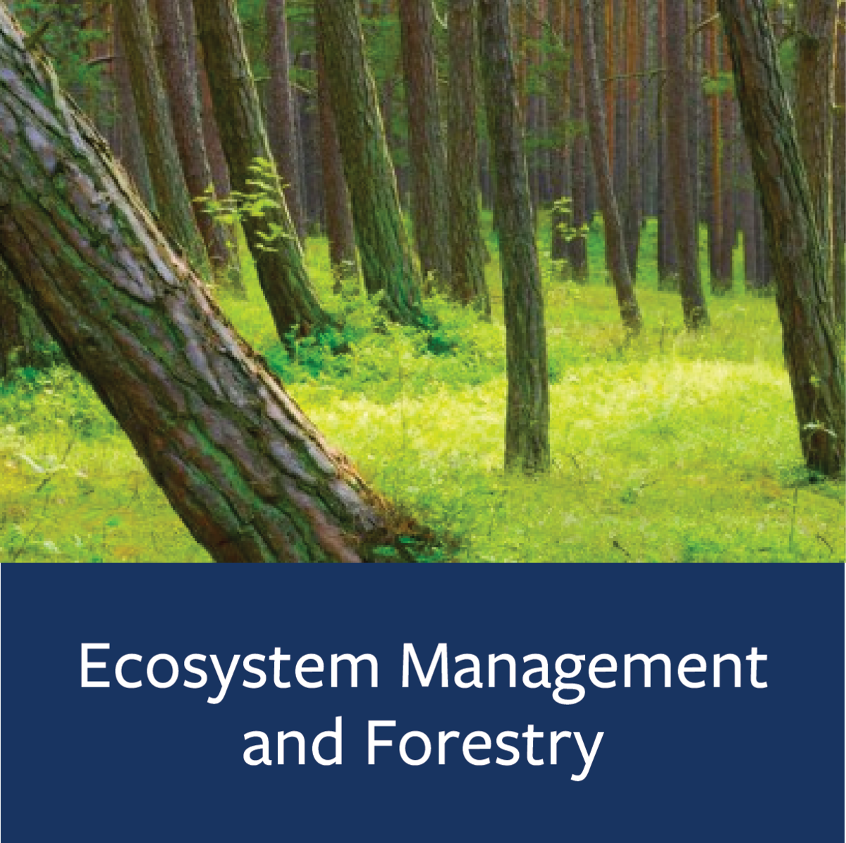 Ecosystem Management and Forestry Major Map