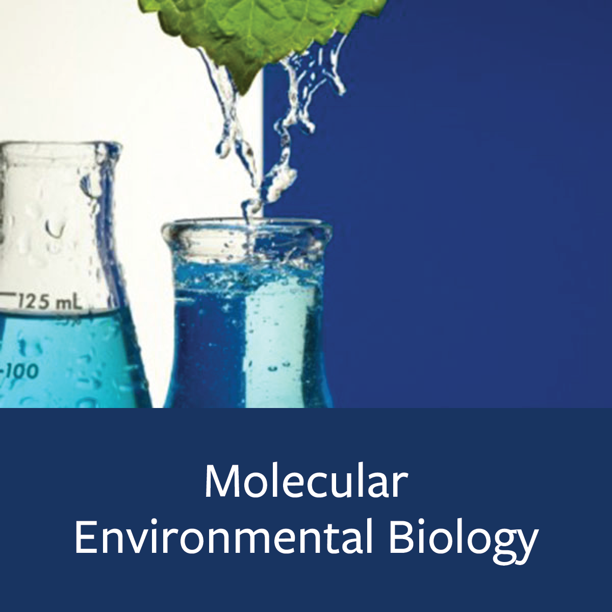 Molecular Environmental Biology Major Map